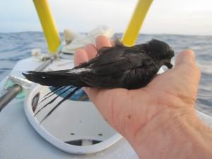 Zmęczony ptaszek odpoczywał kilka godzin w kabinie