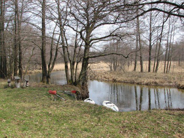 Czarna Hańcza - szlachetna rzeka (fot. Wojciech Makarewicz)